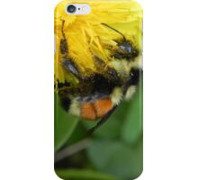Pollen Gatherer iPhone Case/Skin