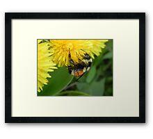 Pollen Gatherer Framed Print
