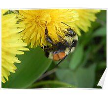 Pollen Gatherer Poster