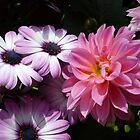 PINK AND PURPLE DELIGHT - DAHLIAS AND DAISIES by RubaiDesign