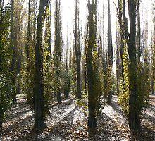 Tree Shadows - Stanborough Park, Welwyn Garden City, Hertfordshire by mikewatson