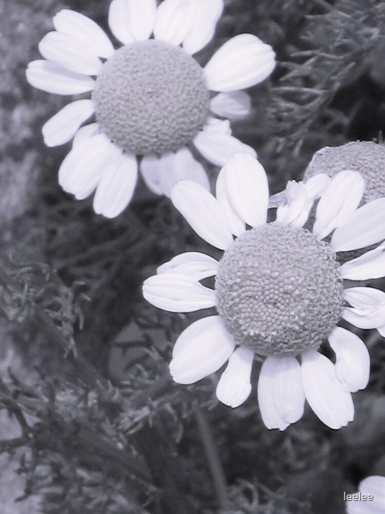Daisy Daisy by leelee