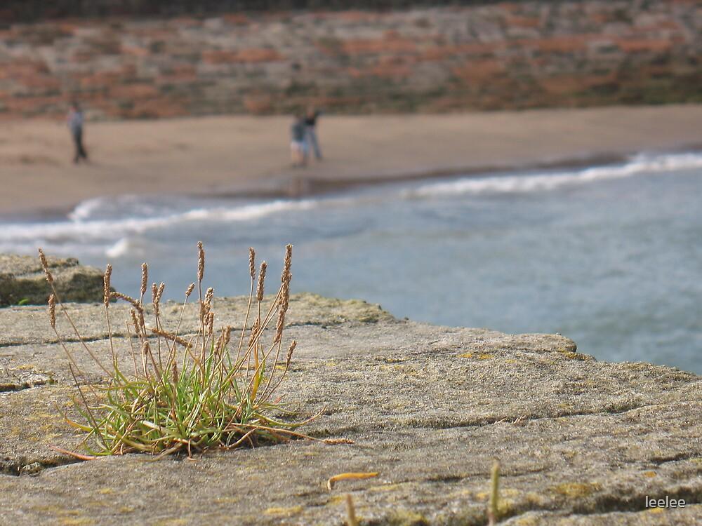 Beach life by leelee