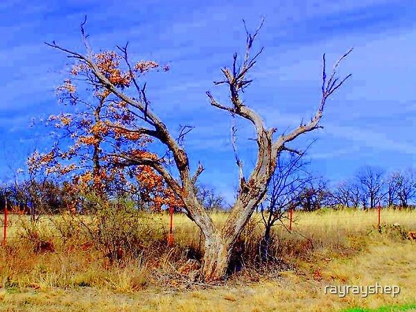 Country Tree by rayrayshep
