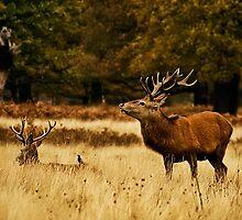 Singing deer by Hanae