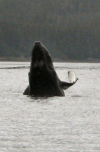 Whale Peek by winecountry
