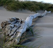 Drift Wood by K Donatelli