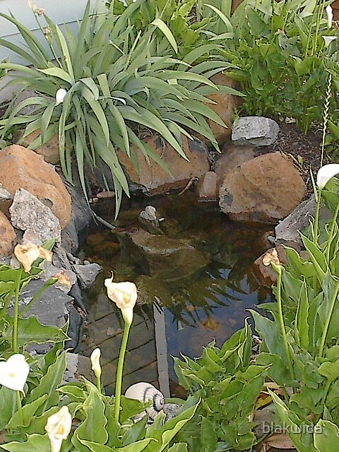 koi pond in my yard by blakwida