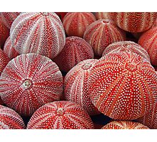 Sea Urchins Photographic Print