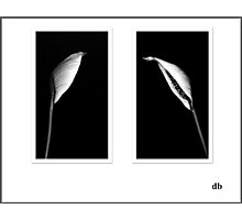 Easter Lily in BW Photographic Print