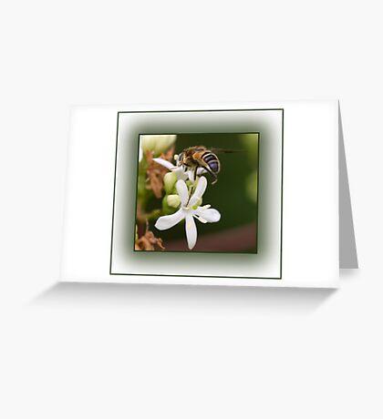 Insect Macro Greeting Card