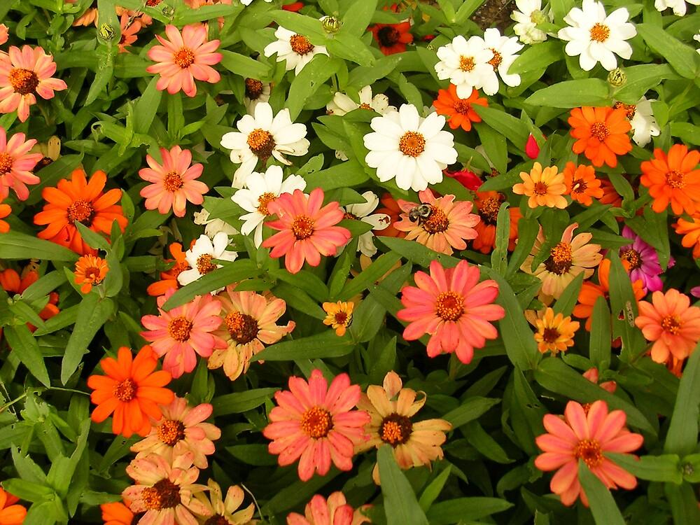 Flower Fun by marchk