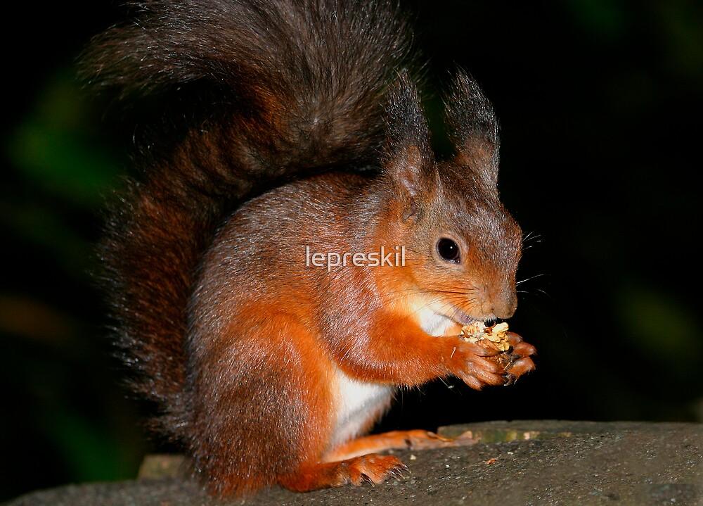Squirrel Feeding 2 by lepreskil