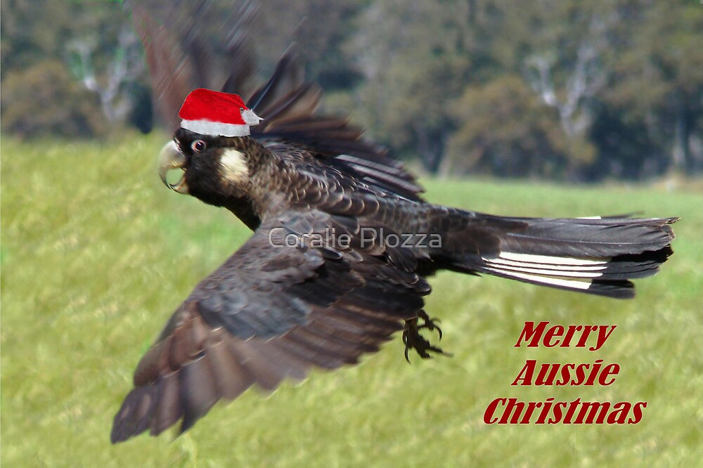 Cockatoo Christmas Card by Coralie Plozza