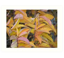 Changed Leaves Art Print