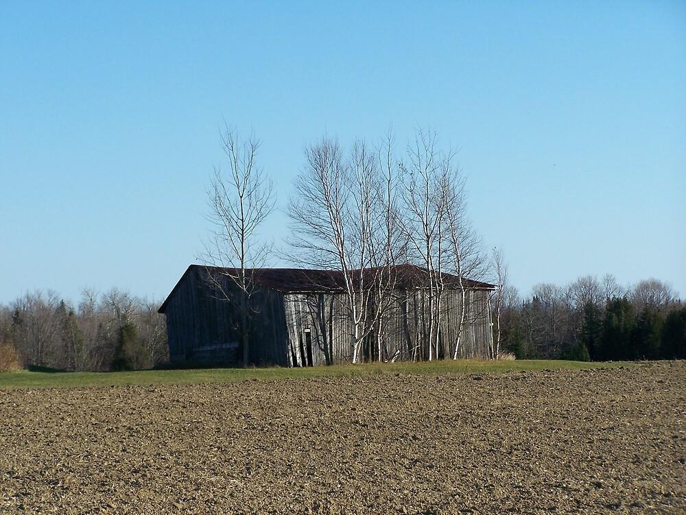 Shed In Field by Gene Cyr