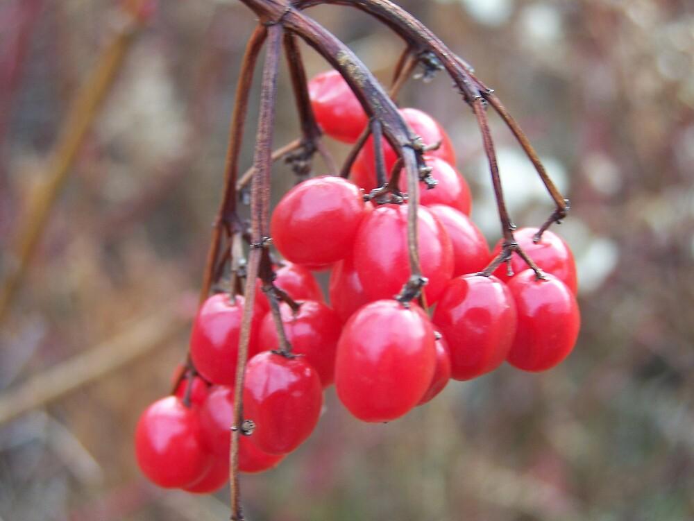 Wild Cherry Bunch by Gene Cyr