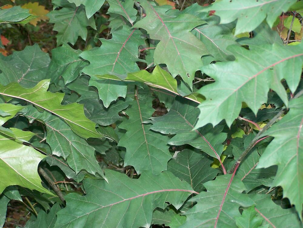 Oak Green by Gene Cyr