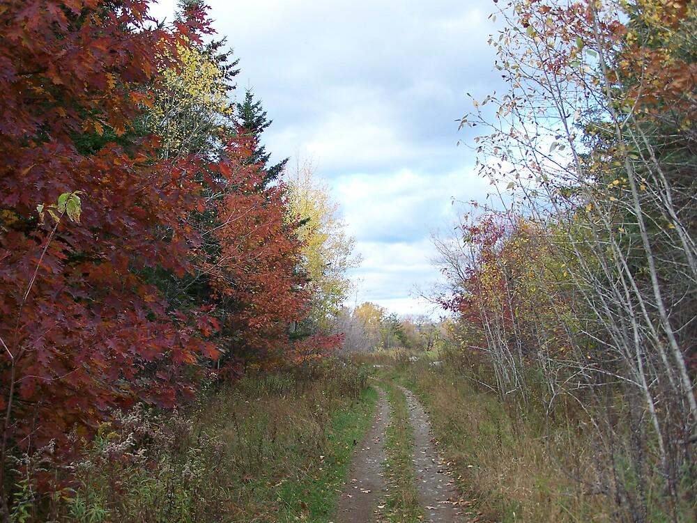 Oak Trail by Gene Cyr