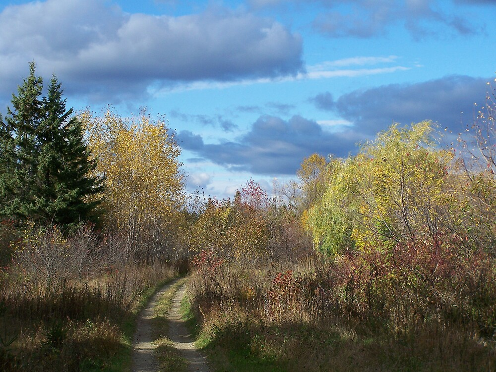 Maine Trail by Gene Cyr