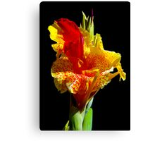Canna Lily Canvas Print