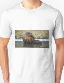 Beaver on the Ice at McConnell's Mill (Mid November 2014) T-Shirt