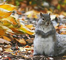 Squirrel by Robert Daveant