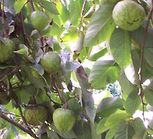 Cheramoya's  [custard apple] by caffine