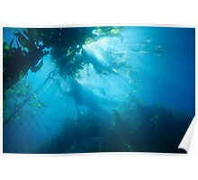 Diver Poster