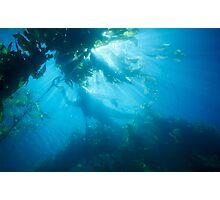Diver Photographic Print
