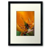 California Poppy Framed Print
