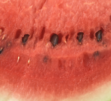 Watermelon Slice as a Healthy and Nutritious Fruit Sticker