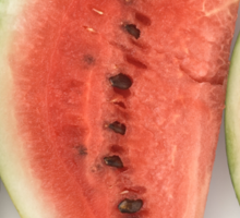 Watermelon Slices as a Healthy and Nutritious Fruit Sticker