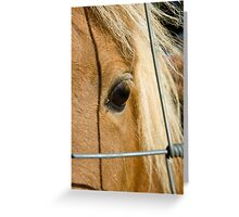 Lonely Poney Greeting Card