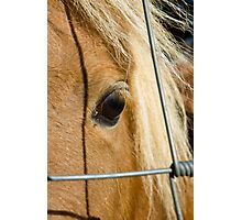 Lonely Poney Photographic Print