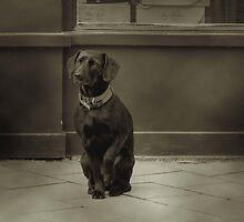 Dog... by Louise LeGresley