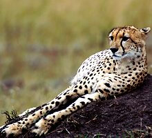 Supine Cheetah by JaneRia