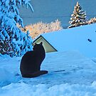 Black cat one winterday. by Annbjørg  Næss