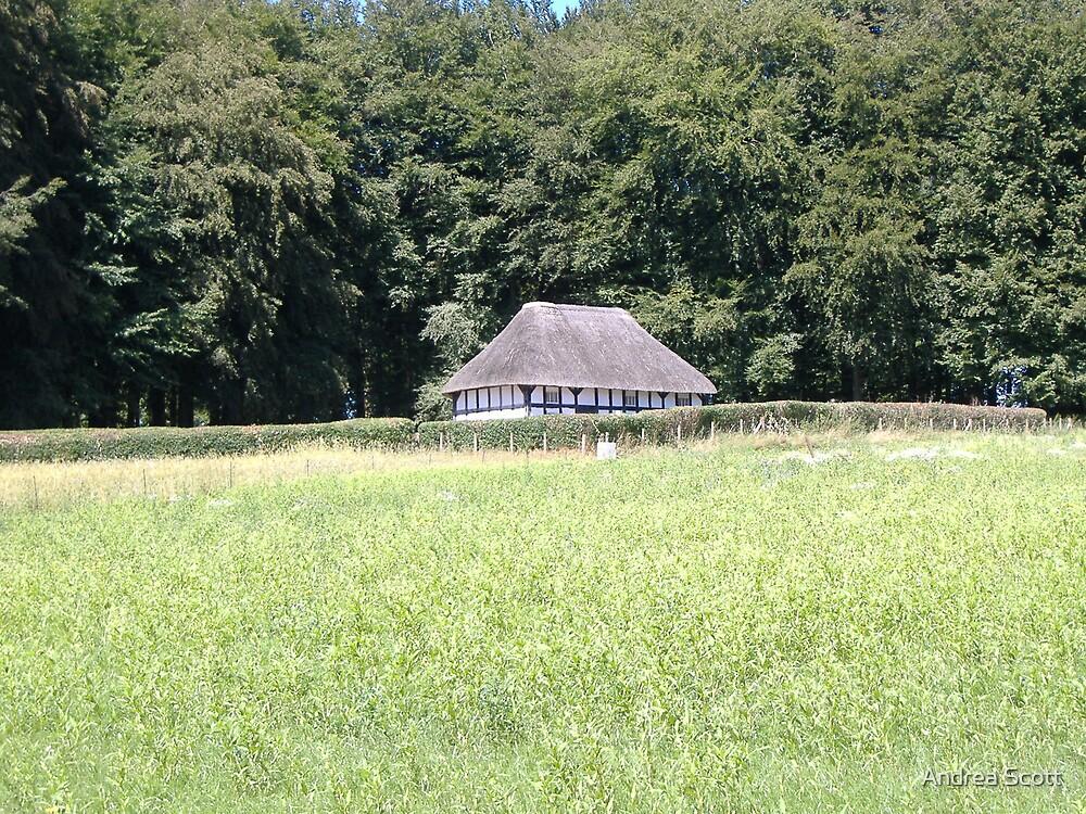 summer meadows  by Andrea Scott