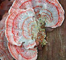 Funky Fungi by patti4glory