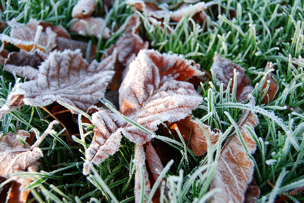 Frosty leaves (close) by Lpixel
