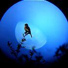 Bird at Moon Rise by Christina Sauber