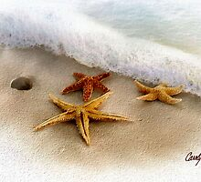 3 Starfish Treasures by Carolyn Staut
