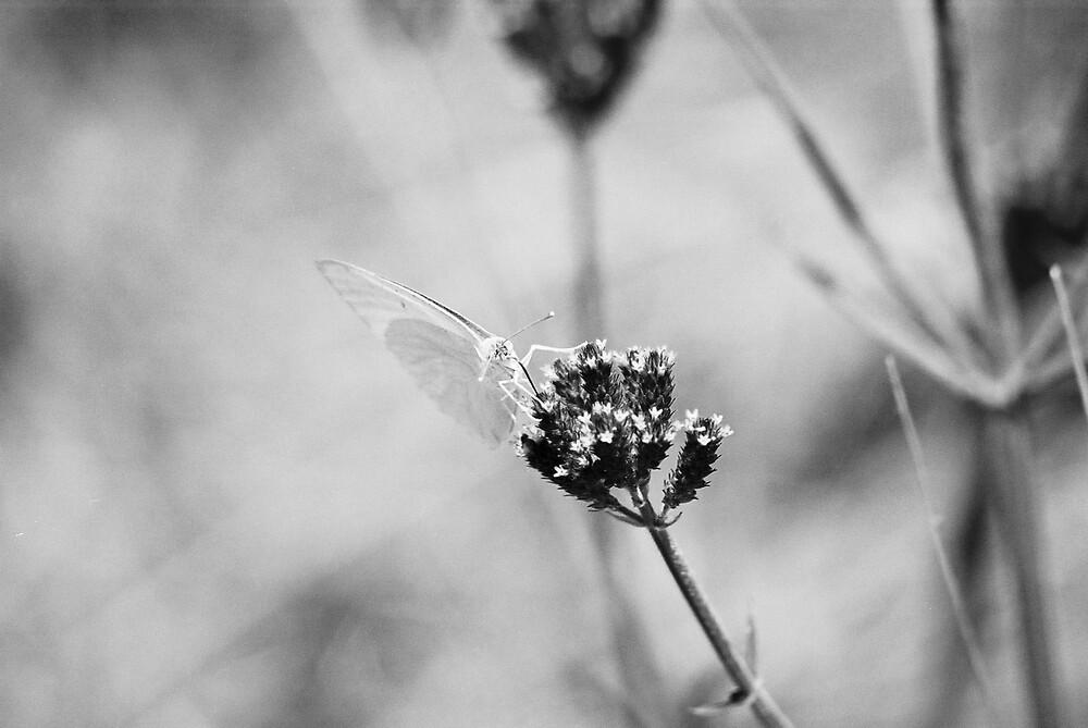 monochrome butterfly by Louw Agenbag