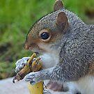 Tasty snack 2 by Steve plowman