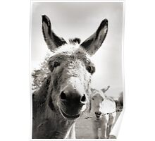 Straad Donkeys Poster