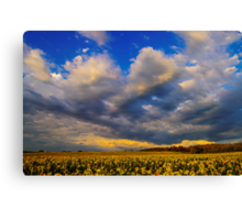 Sunflowers field under the storm light Canvas Print