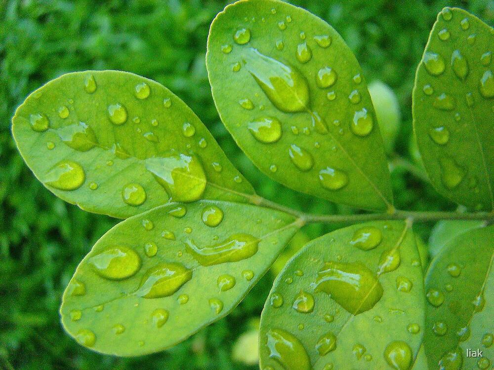 fresh rain by liak