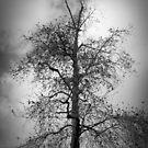Winter Tree by Barbara Gordon
