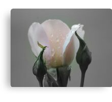 Rosebud in Black and White - (Focal Colour)  Canvas Print
